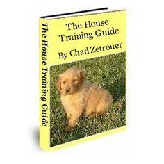 Dog Training School, Dog Training Classes, Dog Training Videos, Training Your Dog, Puppy House, Garden Animals, Go Outside, Pet Care, Puppies
