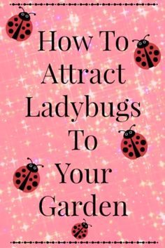 (link) Attracting ladybugs to your garden is not hard.  It is as simple as a few simple steps. (Plants / water / NO insecticides / over-winter care) ***see article for more details & better info*** ~ for more great PINs w/good links visit me @djohnisee ~ have fun!