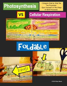 Photosynthesis VS Cellular Respiration FOLDABLE -  it compares side by side the purpose of each process, where they occur, what the equation is for each one, and a diagram to practice learning the steps of each process. Follow me on Facebook  https://www.facebook.com/mrsgclassroom