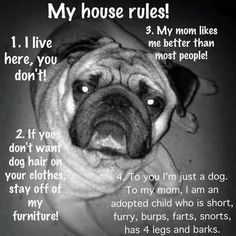 House pet rules