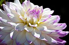 Touch Of Lilac Photograph  - Touch Of Lilac Fine Art Print