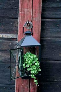 Cute idea to put a plant in the lantern instead of a candle.  A few trailing succulents would work really well in a shallow soil bottom.