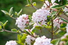 These five flowers that start with K will either blow you away or slowly grow on you, figuratively speaking that is. Check this lovely blooms now!