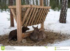 deer feeder homemade - Google Search