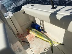 2016 Cobia 296 #knottydawg #296 #cobia #cobiaboats #cobia296 First blood on boat #dolphin #mahi #mahimahi #fishing #offshore #blood #tightline #ocean #funtime #offshorefishing
