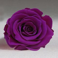 Preserved Roses - Purple. The perfect gift for someone or to add into arrangement to add the cadbury colour! 2018 Wedding Trend: Ultra Violet Purple. For lilac and purple wedding flowers to suit your colour scheme, visit our website at www.trianglenursery.co.uk/fresh-flowers!
