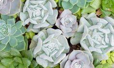 Quadro di piante grasse fai da te da appendere alle pareti! | I sempreverdi