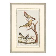 Martinet Bird Family II