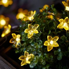 20 Yellow Flower Outdoor Micro Fairy Lights | Lights4fun.co.uk Flower Fairy Lights, Outdoor Fairy Lights, Led Fairy Lights, Flower Fairies, Hanging Lights, String Lights, Outdoor Lighting, Lilac Flowers, Pretty Flowers