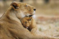 Lioness with her cub, South Africa - photo credit: Gabriela Stebler