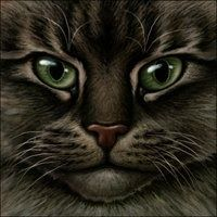 Warrior Cat - dark tabby