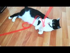 Can cats have fun with a piece of ribbon ?