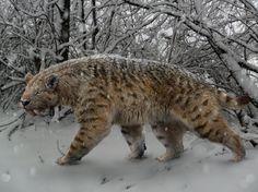Tigre Dentes de Sabre - Smilodon fatalis