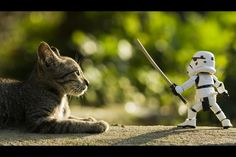 Toys Photography - Fight Me!