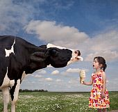 Stock Image of Cow licking girl's ice cream cone. Media Bakery Stock Photography & More offers stock photos, stock pictures, stock images and stock photography. Search our large selection of premium and microstock royalty free and rights managed stock photography. Also offering other stock media, such as footage and fonts.