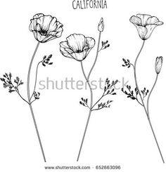 California flower clip-art illustration
