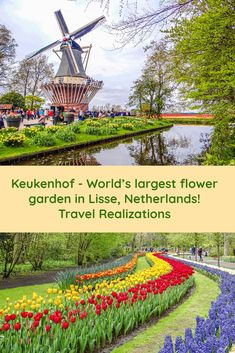 Keukenhof is the world's largest flower garden. This 32 hectare garden with more than 7 million tulips, daffodils and hyacinths offers a rainbow that can be touched. Here I present a photo essay of the world's most beautiful spring garden. Backpacking Europe, Europe Travel Guide, Travel Destinations, Holiday Destinations, Travel Plan, Travel Guides, Travel Goals, Holland, California Wildflowers