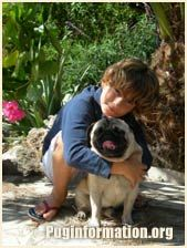 Pug Temperament, Personality and Character