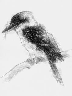 Artist Sean Briggs producing a sketch a day kookaburra  #art #drawing #http://etsy.me/1rARc0J #kookaburra #sketch