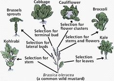 Speciation - Natural Selection