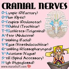 cranial-nerves-nursing-mnemonics … – I Cured My Nasal Polyps Permanently and Naturally In Just 4 Days! Nursing School Tips, Nursing Career, Nursing Notes, Nursing Tips, Nursing Schools, Nursing Board, Nursing Uniforms, Ob Nursing, Rn Nurse