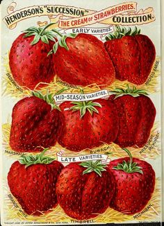 """Henderson's """"Succession"""" The Cream of Strawberries Collection.  Mid-summer catalogue: 1898 Peter Henderson & Co   U.S. Department of Agriculture, National Agricultural Library"""