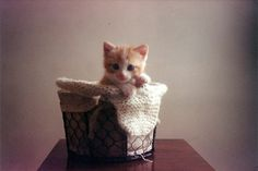 This and other cute kitty pics make me long for raising kittens again! What fun.