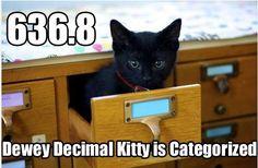 Dewey Decimal kitty