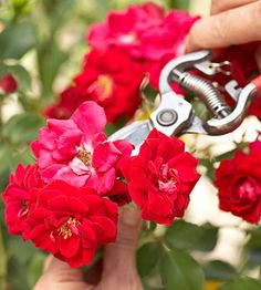 25 Gardening Tips Every Gardener Should Know. from bhg