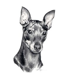 miniature pinscher drawing - Google keresés