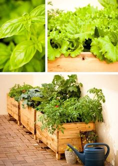CASAMAISCHIC decoração&jardins   COMO TER UMA HORTA NO APARTAMENTO, sementes, compostagem, etc...