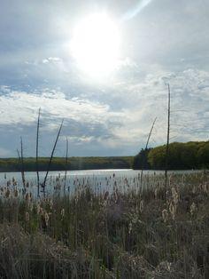 Marsh meets lake, Kettle Lake, Awenda Provincial Park, Ontario, Canada