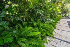 Albury Street by Craig Reynolds Landscape Architecture Tropical Architecture, Landscape Architecture, Tropical Houses, Tropical Garden, Evergreen House, Backyard Paradise, Plant Leaves, Street, Gallery