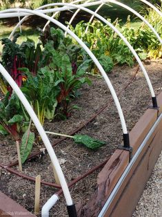 Grow greens and root vegetables all winter long by extending the season with low tunnels over your raised garden beds.
