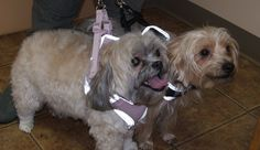 Jazz and Mila Rios  Love the glow in the dark harnesses!