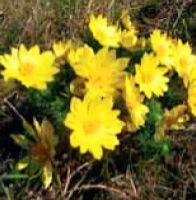 Kvetoucí zahrada bez zálivky