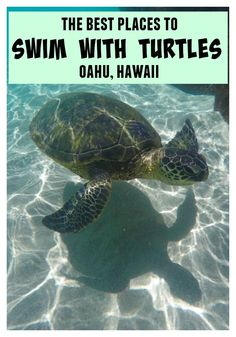 Swimming with turtles is a magical experience and something that is very much possible. Here's a guide to the best places to swim with turtles on Oahu.