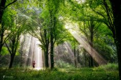 Running in Sunshine - I noticed some people wondering if the rays are made in…