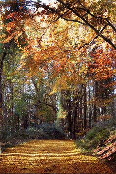 On the hunt for chestnuts in Monte Amiata: where to go to taste them in southern Tuscany.