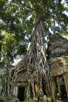 The magnificent and mysterious temple complex of Ta Prohm, where nature definitely has the upper hand over culture, Cambodia (by eb78).