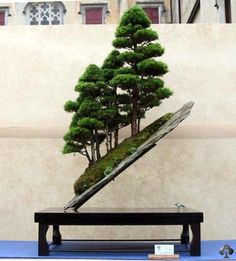 bonzai trees   The World's Top 10 Most Unusual Bonsai Trees   The Worlds top 10 of ...