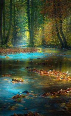 """ Magic Light in the Spessart, Germany, by Rolf Nachbar. """