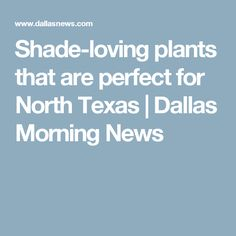 Shade-loving plants that are perfect for North Texas | Dallas Morning News