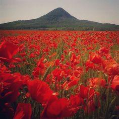 #balaton #kaptalantoti #pipacs #poppy #poppyflower #redflower #flowers #inbloom #instacolor #springtime #summertime #mybalatonsummer #balatonofficial #balatonmethod #moments #mik #instahun #instaart #instamood #instagood #iközösség #ikozosseg #ig_today #ig_daily #igers #landscape #nature #sundayfunday