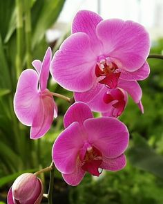 Orchid!   I want one, but I also don't want to kill it once I've gotten one.