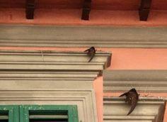 quegli aghi sottili che trafiggono gli uccelli