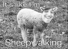 ITS LIKE IM SHEEPWALKINGGGGGG :)