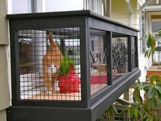 """A catio, an outdoor cat enclosure or """"cat patio,"""" is the purrfect solution to solve the indoor/outdoor dilemma and keep your cat safe, healthy and happy. Diy Cat Enclosure, Outdoor Cat Enclosure, Reptile Enclosure, Cage Chat, Catsu The Cat, Outdoor Cats, Outdoor Cat Cage, Outdoor Ideas, Gazebo Ideas"""