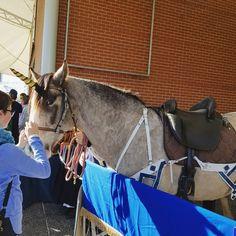 Unicorn spotted at Supanova #unicornsighting #supanova