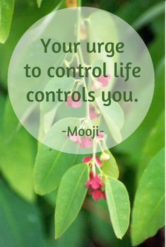 Draw & Wings. - Your urge to control life, controls you. (Mooji)...